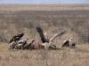 tn_124-avvoltoi-e-grifoni1